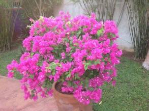 flores-de-merida-yucatan