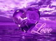 flor-lavender-preciosa-love
