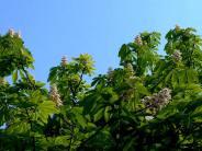 hanna-kozuchowska-flowering-trees-outside-her-window