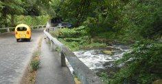 Parque Almendares Bosque de La Habana puente-piedra-rio-almendares y coquito