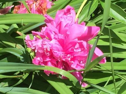 Flores de Richmond Vt