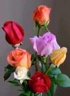 flores preciosas de Nieves