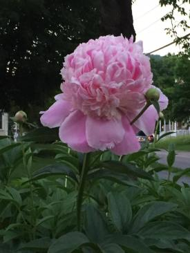 Flowers Floral Tour of Richmond
